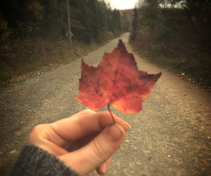 autumn, fall, and maple leaf image