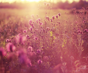 beautiful, purple flowers, and sunshine image
