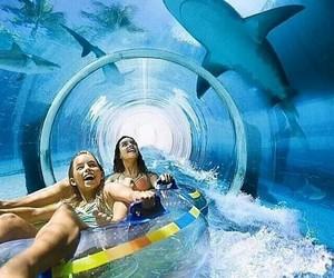 water, shark, and summer image
