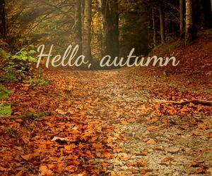 autumn, brown, and Croatia image