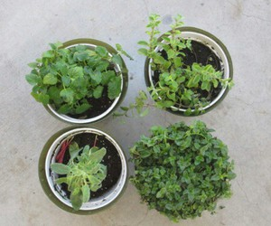 plants, green, and pale image
