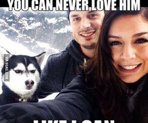 dog, funny, and love image