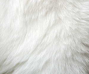 white, fur, and wallpaper image