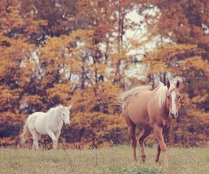 horse, autumn, and beautiful image
