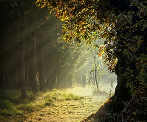 nature, forest, and light image