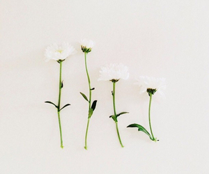 flowers, background, and bloom image