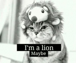 cat, lion, and lol image