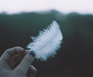 feather, white, and hand image