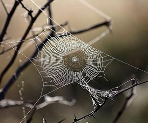 beautiful, web, and cute image