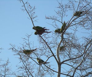 branches, parrots, and sky image