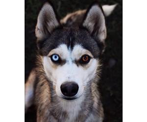 blue, dog, and eyes image