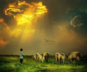 sky, birds, and cow image