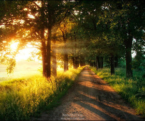 trees, nature, and sun image
