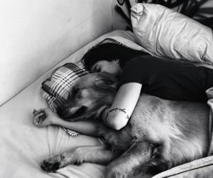 black&white, cute, and dog image