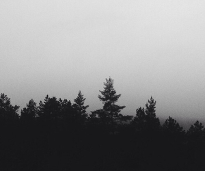 black, forest, and nature image