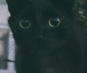cat, black, and grunge image