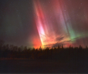 sky, northern lights, and forest image