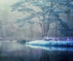 beautiful, illustration, and tree image