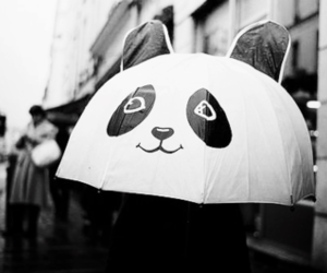 panda, umbrella, and rain image