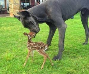 dog, animal, and deer image