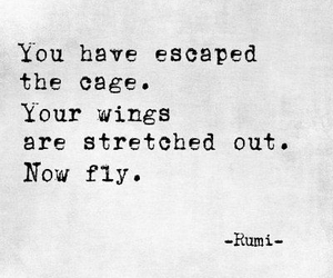 quotes, wings, and words image