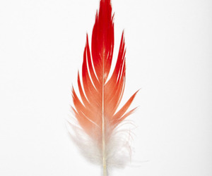 feather, black and white, and red image
