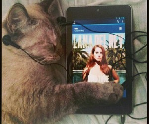 cat, lana del rey, and music image