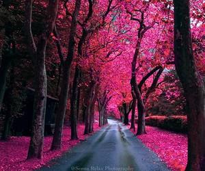 beautiful, pink, and tree image
