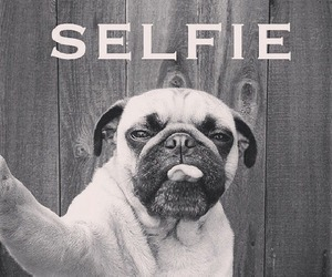selfie, dog, and funny image