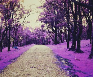 beautiful, landscape, and purple image