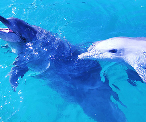 animals and dolphins image