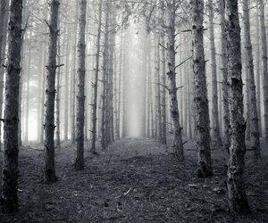 black, silent, and vintage image