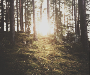 forest, sun, and nature image