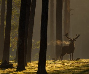 deer, forest, and woods image