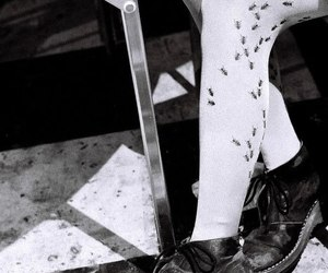ants, boots, and bugs image