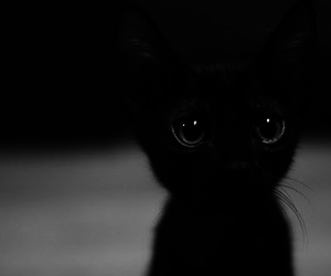beauty, life, and black image