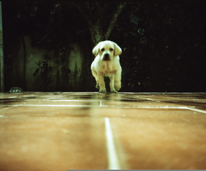 lomography and puppy image