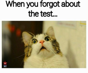 cat, funny, and school image