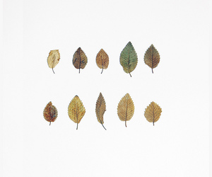 leaves and folhas image