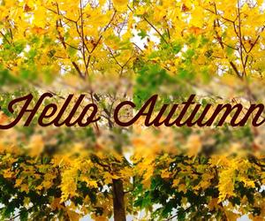 autumn, cozy, and wonderful image