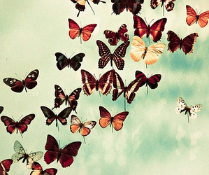 borboletas and butterflies image