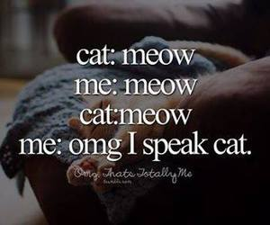cat, funny, and me image