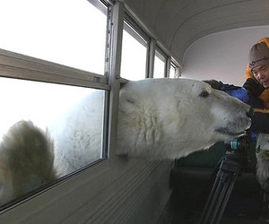 bear, science, and window image