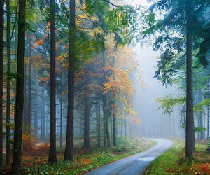 beautiful and forest image