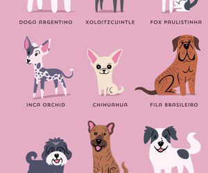 chihuahua, dogs, and latin american image