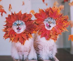 cat, autumn, and cute image