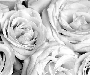 roses, wallpaper, and jarlath mellett image