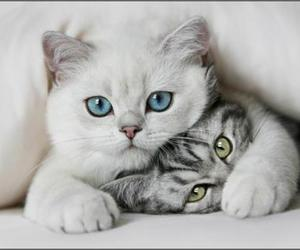 adorable, cute, and cat image