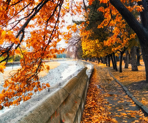 autumn, cold, and beautiful image