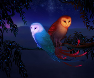 animals, digital art, and owl image